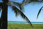 palmen, altijd een vakantiegevoel