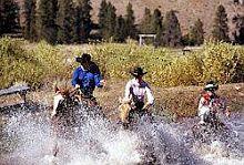 Een ervaren rijder mag met de cowboys mee